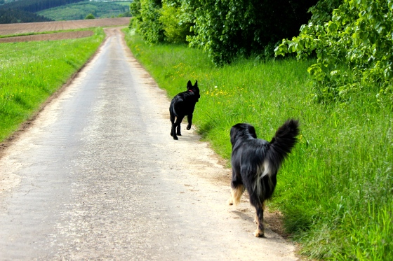 Dogs enjoying the German countryside.