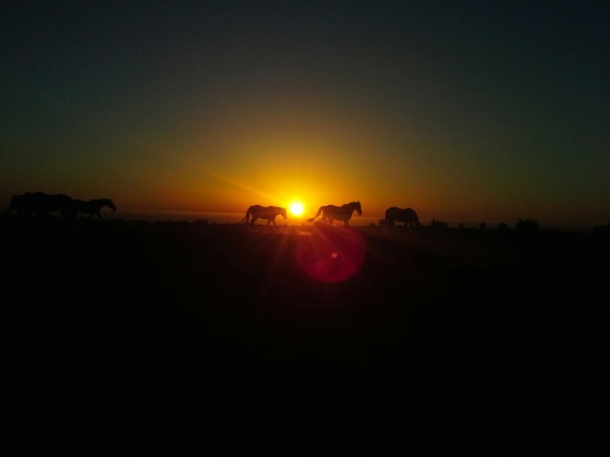 Why is the sun always setting here?! If only there were horses in the horizon.